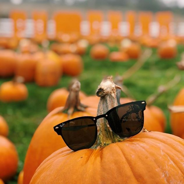 Ray Ban sunglasses on a pumpkin